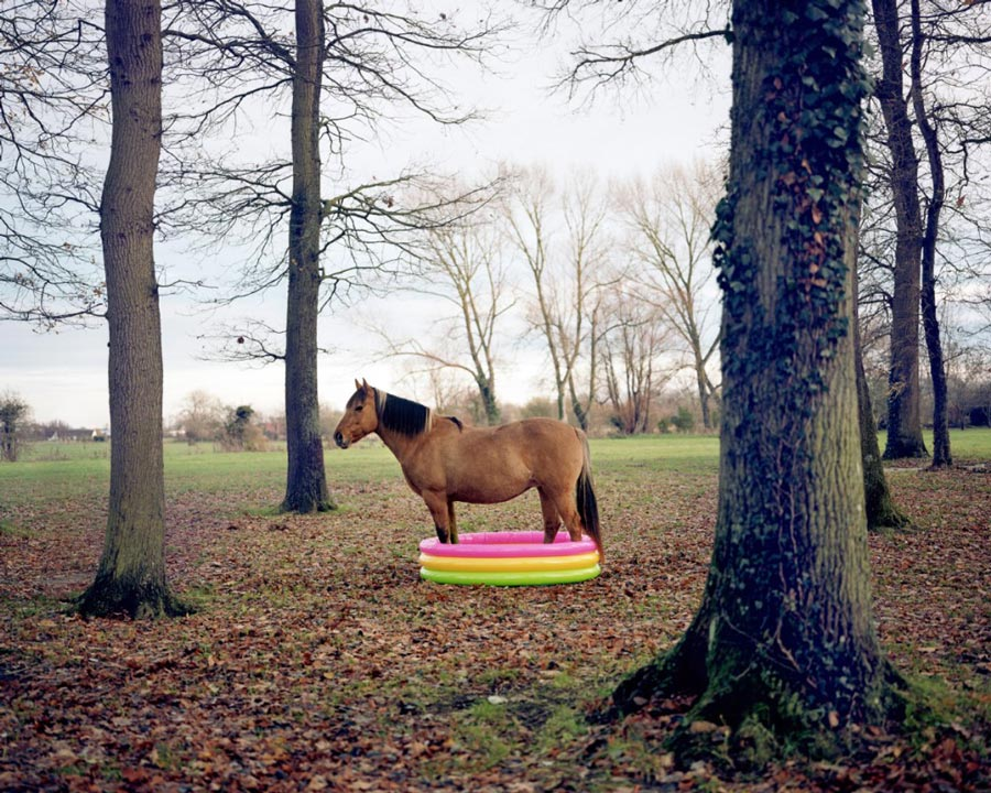 J.-B. Courtier - Cheval | agencegrafik.