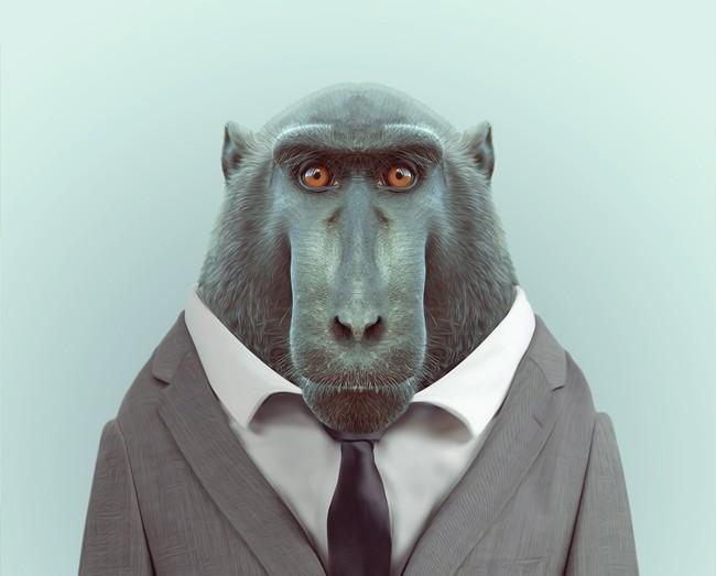 Zoo Portraits by Yago Partal | agencegrafik.
