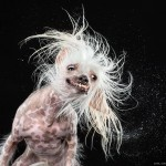 Shake - Carli Davidson | agencegrafik.